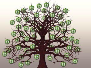mony tree