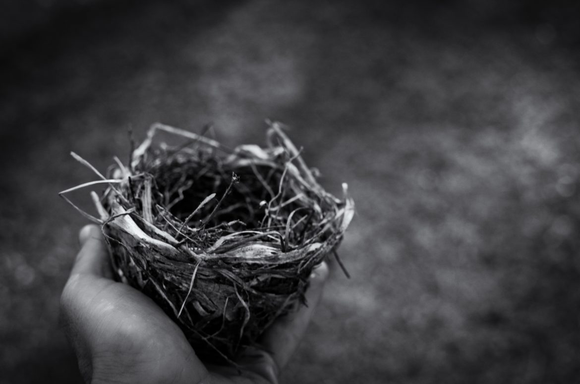 empty nest in hand